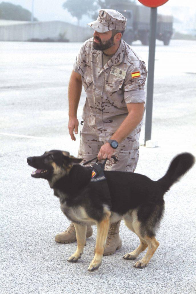 Tercio Sur Infantería de Marina perros